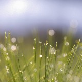 Flare-et-nature-simple-matinale
