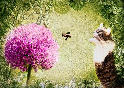 Chat-fleur-et-labeille.jpg