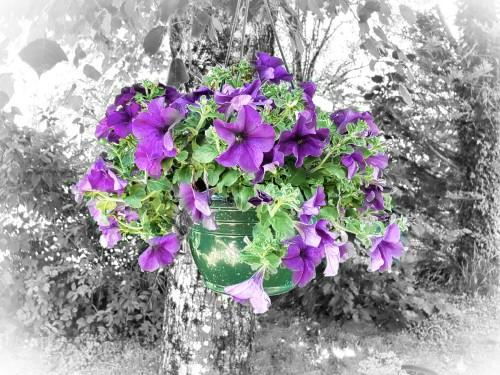 Pot_de_Fleur_sur_arbre.jpg