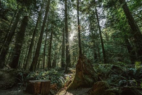 dense-forest.jpg