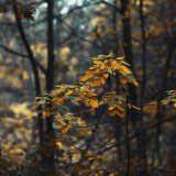 forest-leaves-changing-in-fall