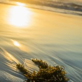 seaweed-washed-up-on-beach_4460x4460